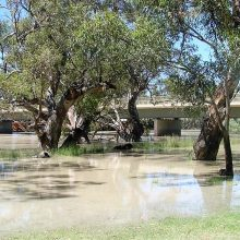 Menindee Bridge