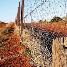 cameron-corner-dog-fence