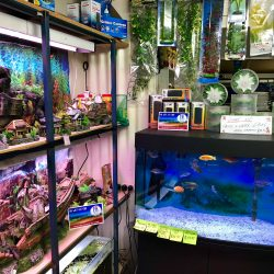 Kings Aquariums and Gift Shop (3)